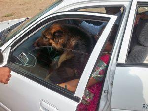 harase-perro de mi marido que vivió 8 años, metiendose en el coche el día de nuestra boda en India