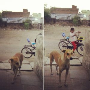 perros-callejeros-en-india con los que tu mascota tendrá que lidiar y tener cuidado, ya que está muertos de hambre... Este es un perro callejero que venia siempre a pedir comida