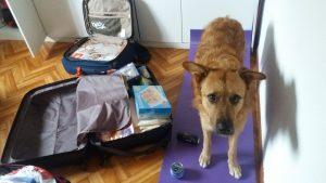 chiku-y-las-maletas
